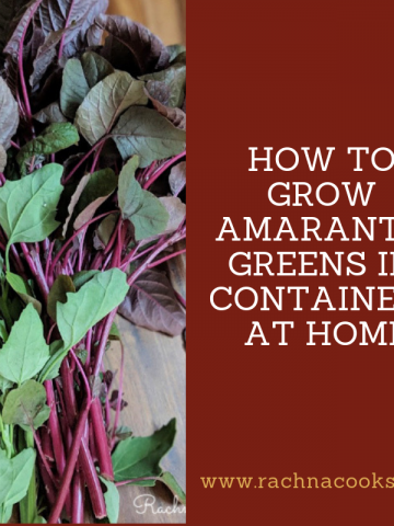 how to grow amaranth greens at home